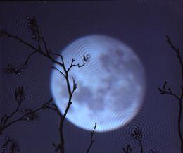 Susan Derges, 'Full Moon – Alder,' 2003, galerie nichido / nca | nichido contemporary art