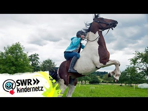 Pferdeflustern Folge 71 Tiere Bis Unters Dach Swr Kindernetz Youtube In 2020 Outdoor Garden Sculpture Outdoor Decor