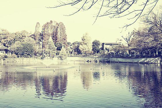 Park near my house