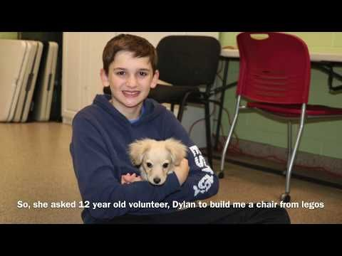 A Disabled Dog With No Front Legs Can Now Run And Play Thanks To A 12 Year Old Volunteer At An Animal Shelter Who Built Her A Wheelch 12 Year Old Disabled Dog