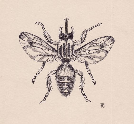 Fruit Fly Illustration by Stippling or Pointillism