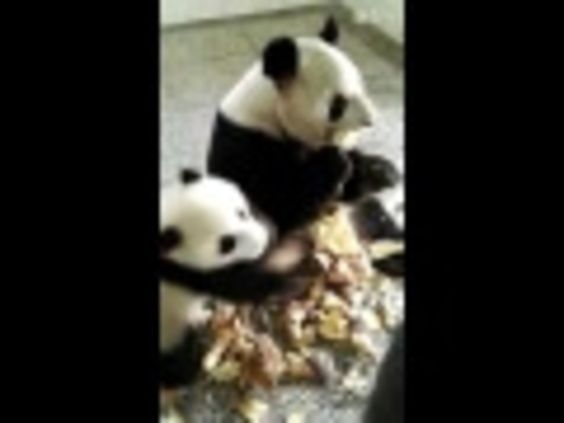 This panda just doesn't want to share its yummy snack