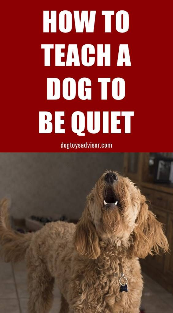 Believe It Or Not The Best Way To Get A Dog To Be Quiet Is To