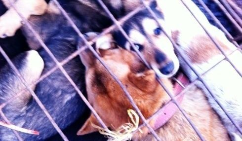 Petition · Stop Horrific Dog Meat Trade!!! Demand China Make Animal Cruelty Laws!!! · Change.org