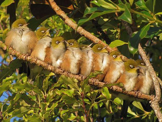 Huddles de pássaros