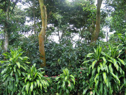 3 Reasons You Should Drink Organic Coffee