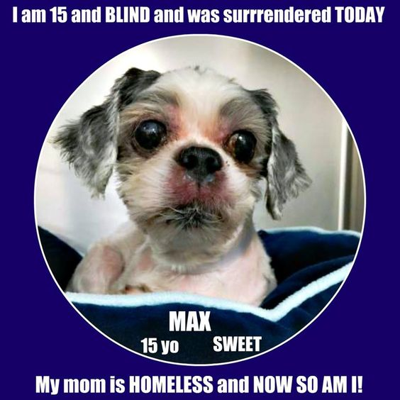For 15 years Max lived in the same home. Imagine how devastated he had to have been when his human companion surrendered the blind Shih Tzu to a shelter in Long Island because she became homeless? Sadly, Max's human didn't stay around long enough to complete the information sheet to help Max find his new home. https://www.facebook.com/photo.php?fbid=10209273558376906&set=a.2999296182345.2154328.1260507014&type=3&theater