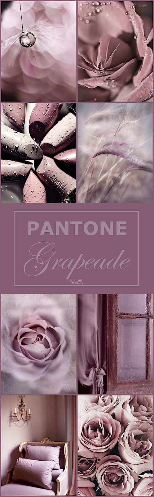 Brilliant Luxury♦Pantone Fashion Color 2019 ~ grapeade