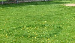 Fairy ring. I know this should be a BAD thing to have in a lawn, but I love it.