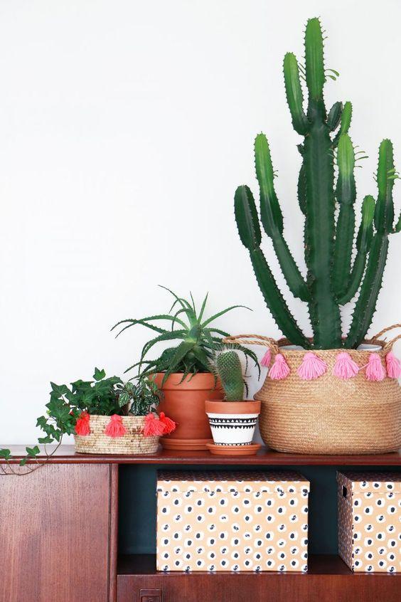 #cactus #green #plants Bron: Tekst en fotografie Marij Hessel