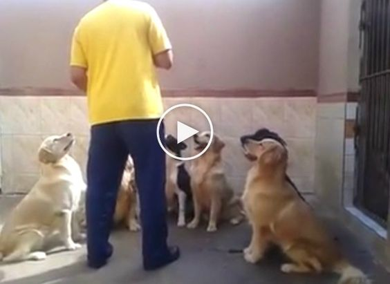 You have to see the dogs in action to believe it! The trainer of these dogs is going out to the yard with bowls of food for these amazing dogs. When he places them on the ground, Well you know … Continued