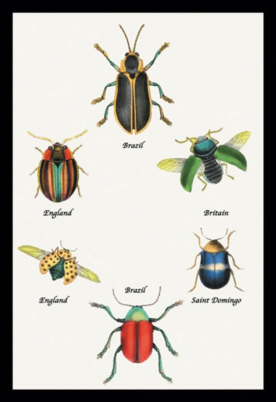 Beetles of Brazil, Britain, England, and Saint Domingo, by Sir William Jardine