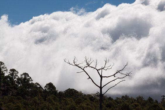 Secret Tenerife: Weather Forecast for Tenerife 18 to 24 January