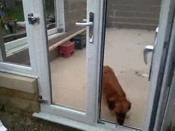 22 απίστευτα σκυλάκια που αποδείχθηκαν πολύ κακά παιδιά (Μέρος 2)