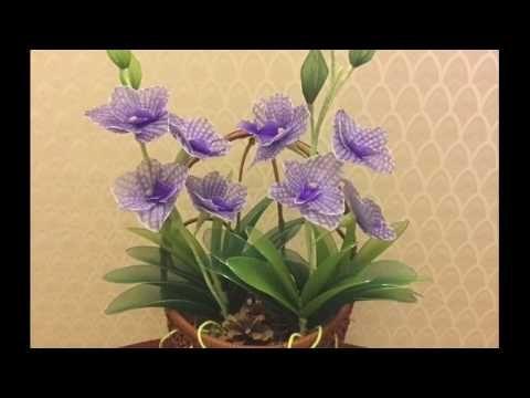 Pin On Kwiaty Z Rajstop