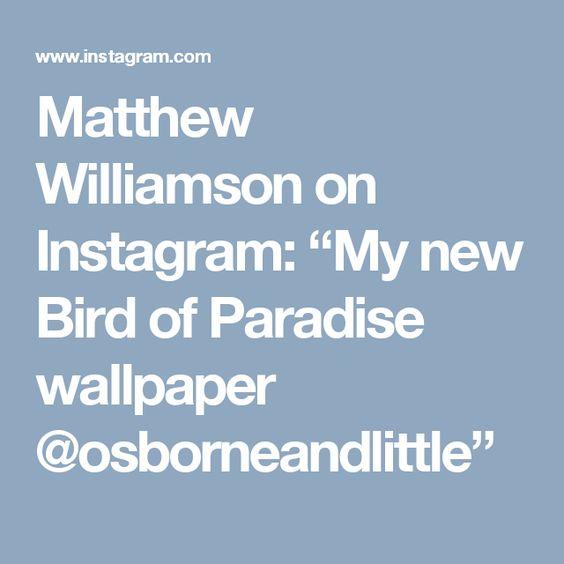 "Matthew Williamson on Instagram: ""My new Bird of Paradise wallpaper @osborneandlittle"""
