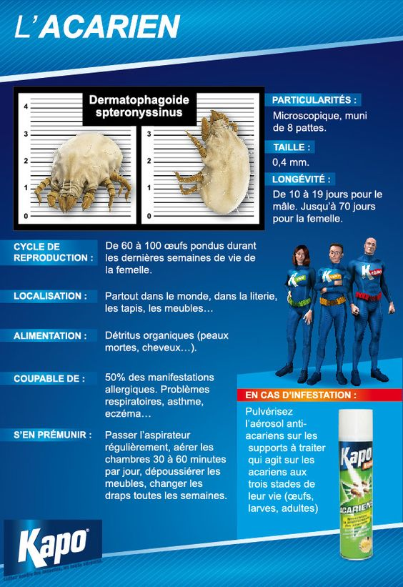 Insectes - Infographie : fiche d'identité de l'acarien (insecticides Kapo)