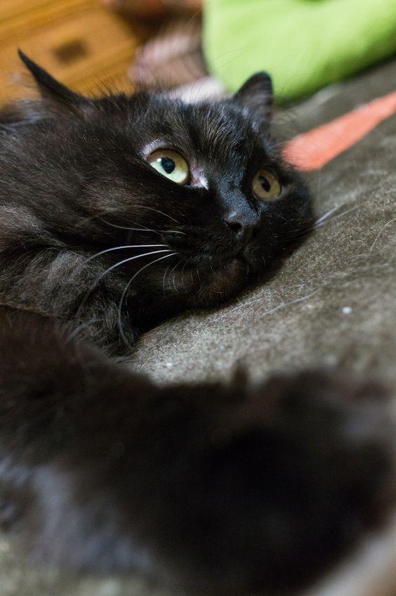 Black Cat LOve ~♡