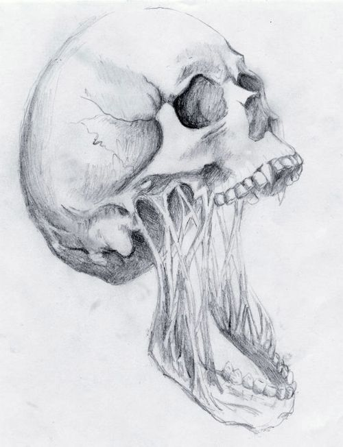 Skull With Jaw Dropped