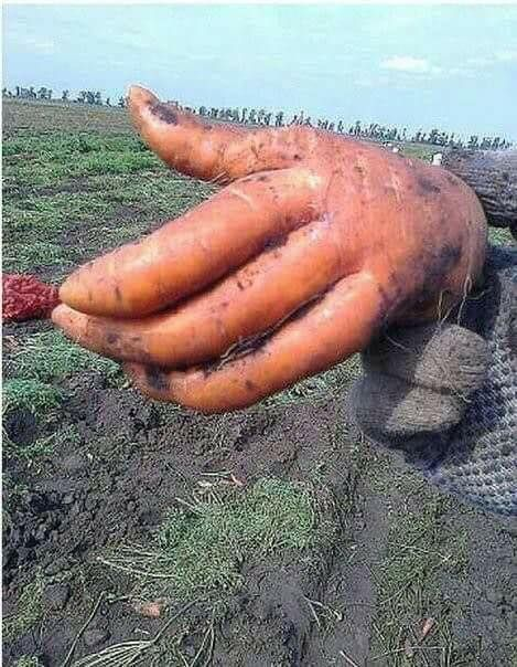 Unique carrot creepy or cool?