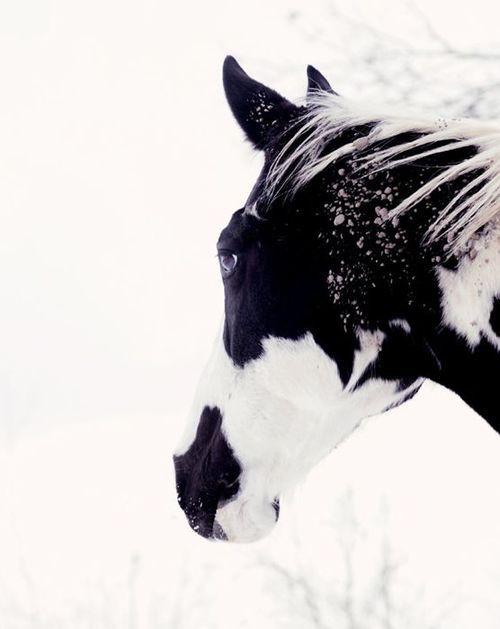 #winter #horses #snow #nieve #caballo #invierno