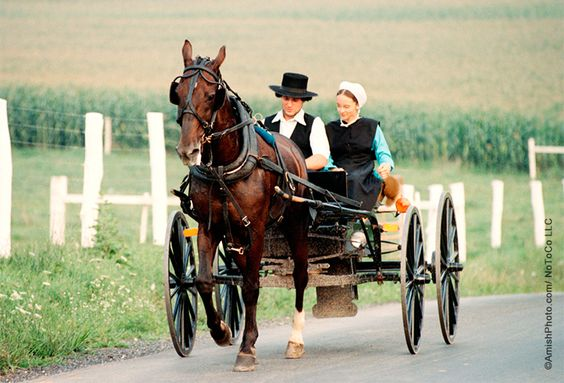 What makes a courting buggy different from a traditional Amish buggy? The answer may surprise you...  Photo by Bill Coleman, ©AmishPhoto.com