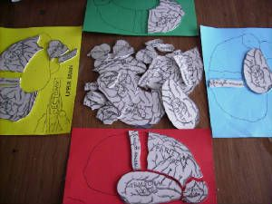 """""""Printables"""" - Brain Ectomy Game - Learning About the Different Brain Lobes (frontal, temporal, occipital, parietal, sensory cortex and motor cortex) and what their function is."""
