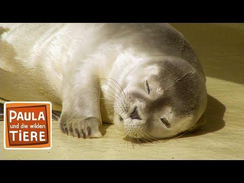 Eine Sandbank Voller Robben Doku Reportage Fur Kinder Paula