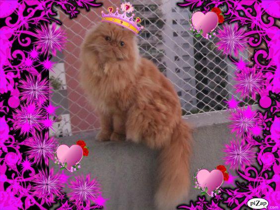 Princesinha Mel Cat