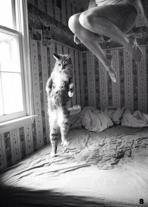 Cat - Jumping