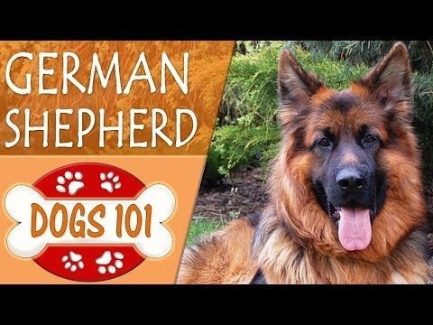 Top 10 Most Loyal Dog Breeds That Will Never Leave Your Side