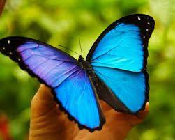 selva amazonica mariposas - Buscar con Google