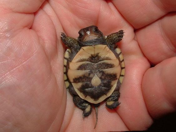Baby tortoise!!  HE'S SO TINY