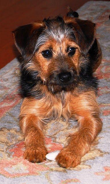 sweet dog Hershey!