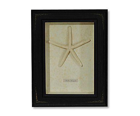 frame a  STARFISH