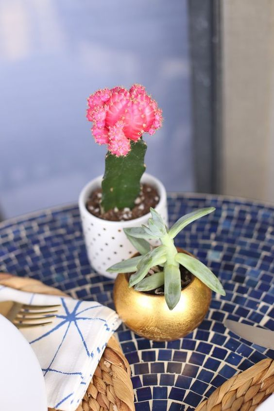 succulents for an outdoor patio via @mystylevita - 1