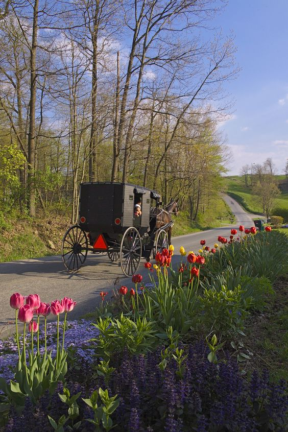 Say hello to the little one watching from her buggy. CLICK HERE for more about Ohio's Amish Country at www.OACountry.com! #Amish #Ohio #Tourism (Doyle Yoder photo)