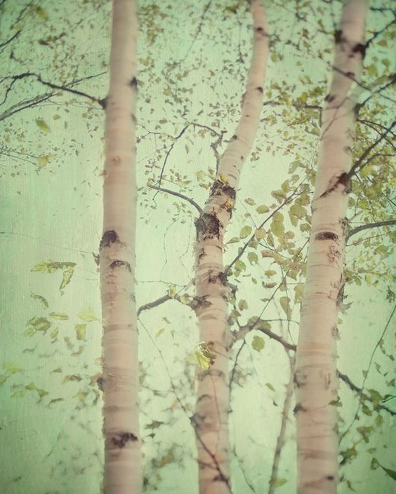 Items similar to Birch Trees, Forest Photograph, Spring, Fresh Mint Green, Pastel, Home Decor, Nature Photography - Forest for the trees on Etsy