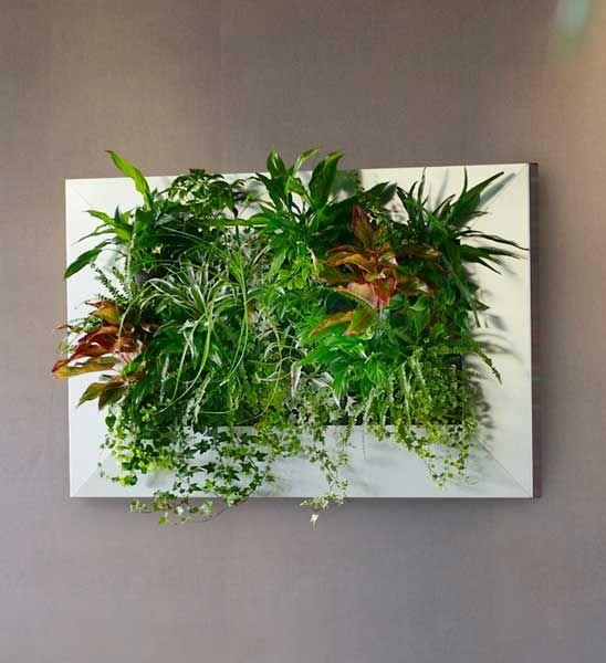 Livepicture Pflanzenbild 70 X 70 Cm Im Greenbop Online Shop Kaufen Pflanzen Coole Zimmerpflanzen Garten Design