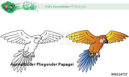 99 Neu Fliegender Papagei Malvorlage Sammlung Ausmalbilder Papagei Ausmalen Malvorlagen