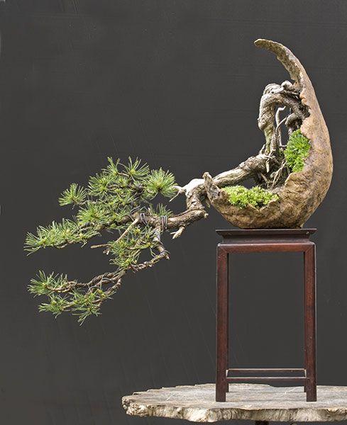 Bonsai, Bonsai and Bäume on Pinterest