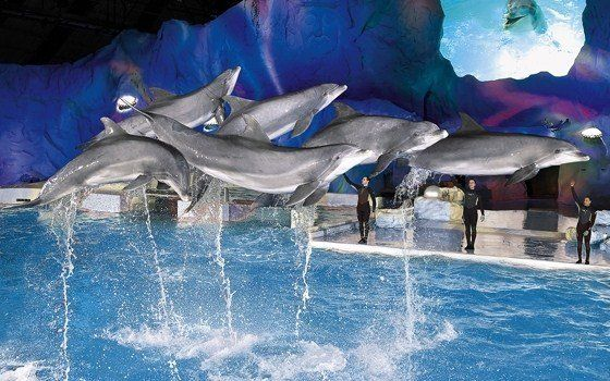 Dolphin show at the Dolfinarium in Harderwijk