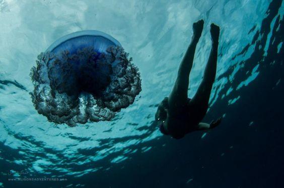 Sarah Lee Underwater