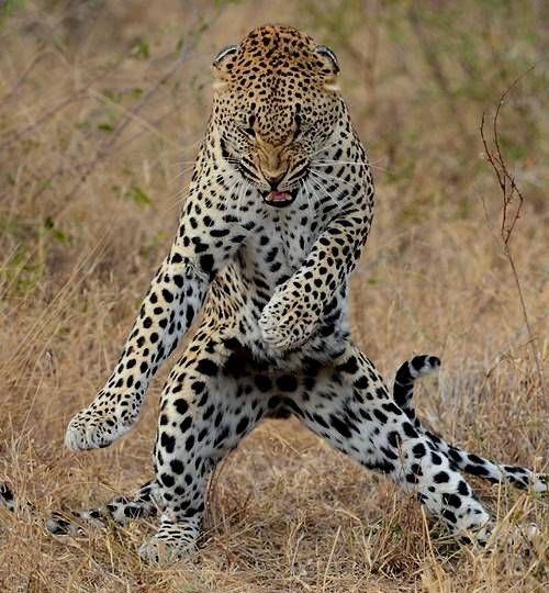 Animal dancing | Breathtaking landscape pictures | Pinterest ...