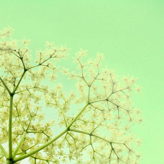 flower photographyCuckoo-Flowers Fine Art by KeriBevan on Etsy