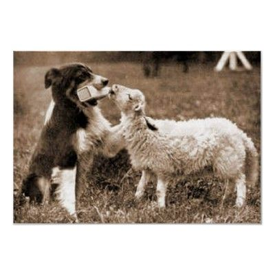 """Border Collie and Lamb"""