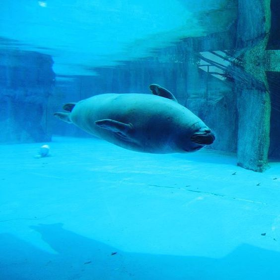 Harbor seal at the Milwaukee County Zoo. Submitted by Instagram user kaylakasten77.