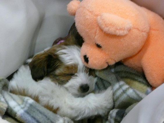 Tala and her teddy bear