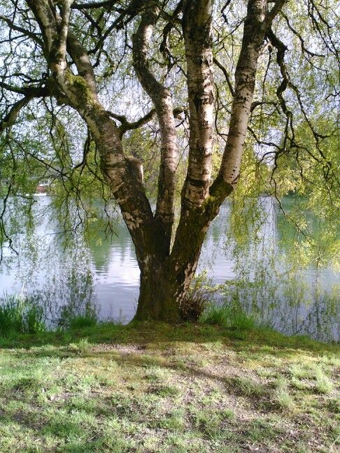 Landscaping Woodland Wa : Woodland wa trees
