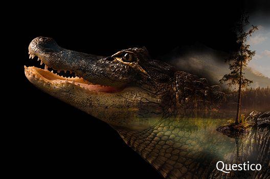 Traumdeutung Krokodil Traumdeutung Krokodil Traumzeichen